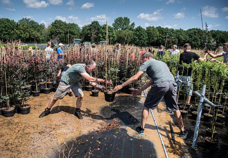 Een boomkweker in Broekhuizenvorst krijgt hulp van buurtbewoners om zijn bomen en planten te redden van het hoge water.  Beeld Koen Verheijden