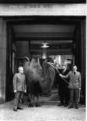 Marcel Broodthaers (in zwarte jas) poseert aan de ingang van het Paleis voor Schone Kunsten met een kameel geleend uit de Antwerpse zoo.