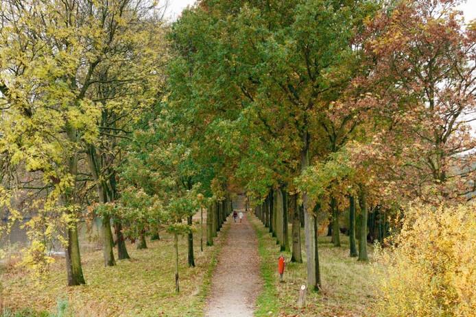 De vesting Willemstad wordt omgeven door bomen. De lindes worden vervangen omdat ze bij stevige wind om zouden kunnen vallen. foto marcel otterspeer/pixs4profs