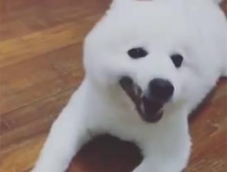 Deze hond klinkt als Donald Duck