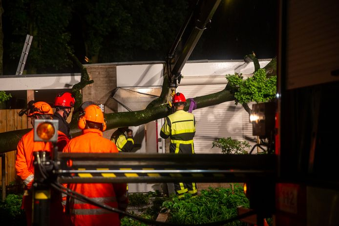 Afgebroken tak zorgt voor schade aan twee woningen in Ossendrecht.