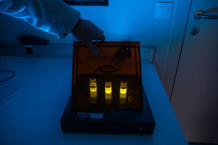Oplichtende antigenen in een laboratorium van het Spaanse biotechbedrijf Algenex, dat met overheidssubsidie de pandemie helpt te bestrijden. Beeld Getty Images