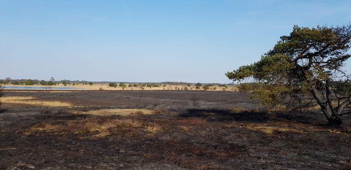 Verbrande hei op de Strabrechtse Heide