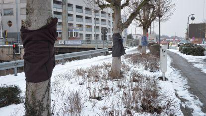 Bomen dragen kleding om minderbedeelden te helpen