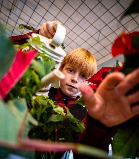 Jesse koestert zijn kerststerren in het plantenasiel: 'Als je een plant verzorgt en hij blijft leven, heb je een soort vriend'