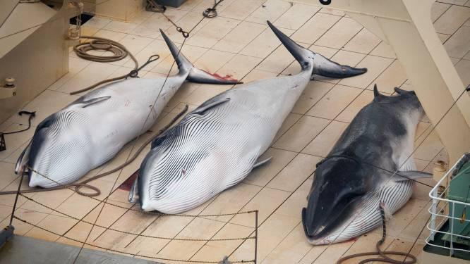Japan investeert in nieuw 'moederschip' voor controversiële walvisvangst