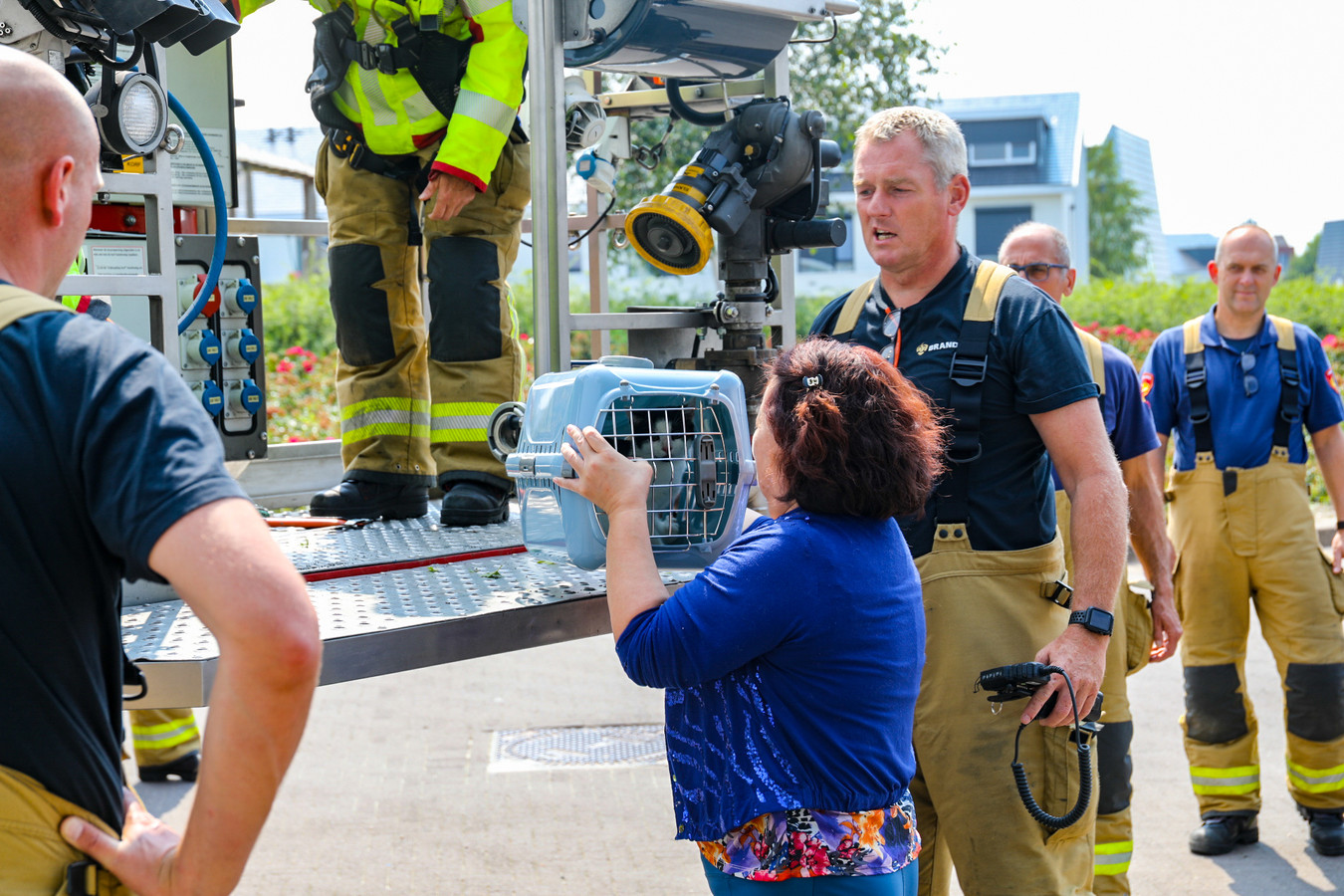 Kitten wordt door de brandweer uit de boom gered in Apeldoorn