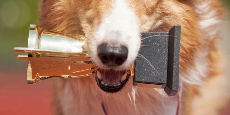 world-dog-show-nederlandse-hond-winnaar.jpg