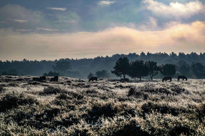 Natuurgebied het Soerendonks Goor.