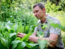 Voedselbossen in Twente zijn booming, maar nog lang geen business
