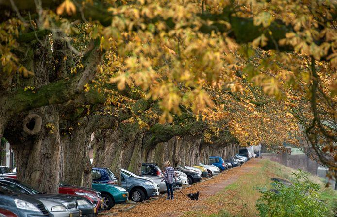 De kastanjebomen aan de Bossche Van der Weeghensingel in de herfst