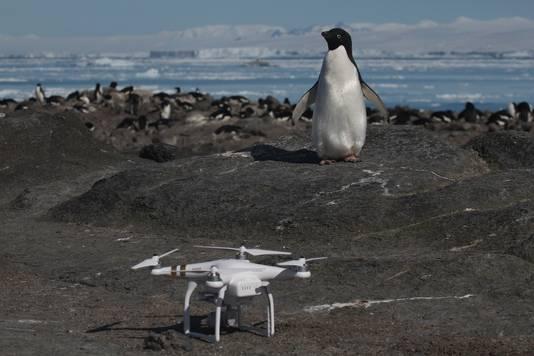 De onderzoekers gebruikten drones om de omvang van hun ontdekking in kaart te brengen