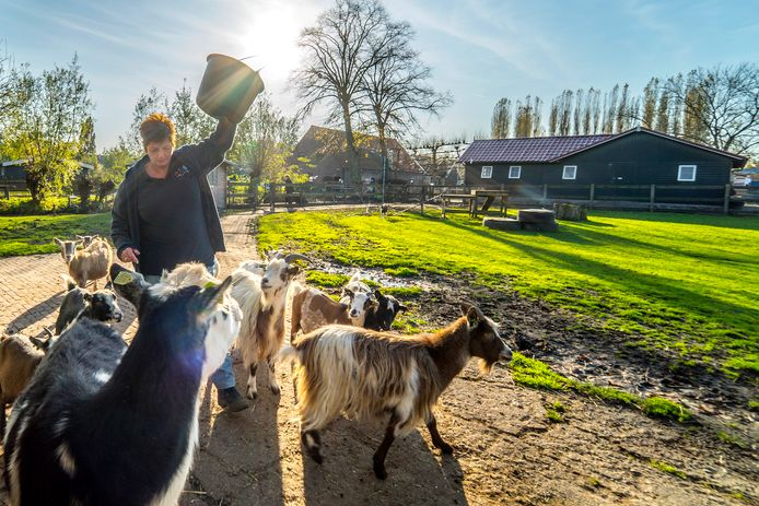 Kinderboerderij Tanthof weer onzeker over voortbestaan.
