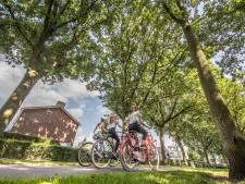 Zwolle scherpt kapregels aan na bomenblunder rond 'ergerniseiken'