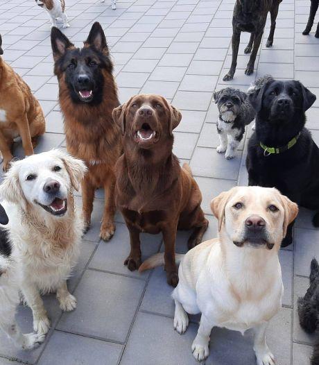 Asiels vol gedumpte 'avondklok-honden'? Dat valt gelukkig mee
