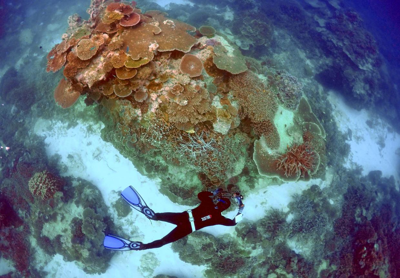 Het Great Barrier Reef in Australië.'Als de koraalriffen sterven, zullen de oceanen veranderen in een dode massa', zegt Kolbert. Beeld REUTERS