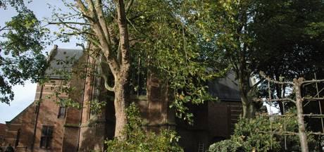 Esdoorns, plataan en beuken geven tuin Catharijnekerk weer meer licht