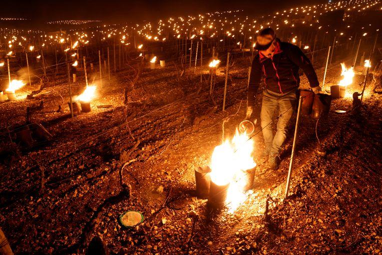 Een wijnboer uit Chablis probeert zijn wijnstokken te beschermen tegen de vorst. Beeld REUTERS