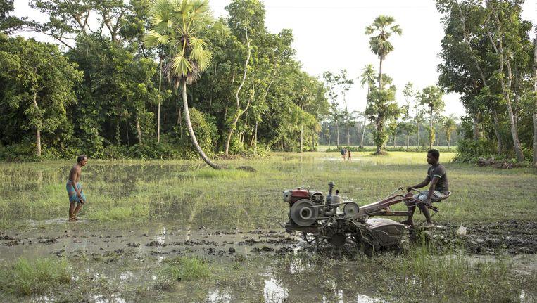 Landbouw in Bangladesh, dat te kampen heeft met veel wateroverlast. Beeld Mike Roelofs