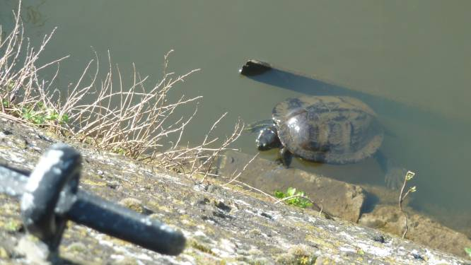 'Schildpadjes gaan langzaam dood'