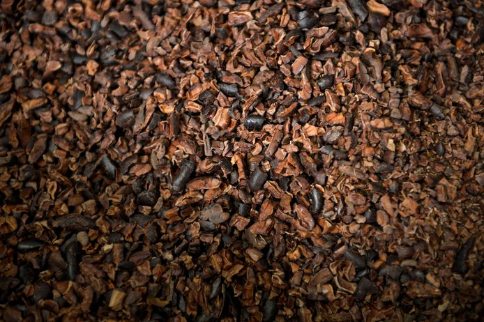 Cacaobonen.