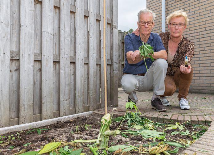 Jan en Jannie van Raalte met wat restanten van de twee wietplanten in hun tuin. Jannie heeft een flesje wietolie in de hand.