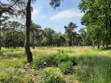 Onrust over uitrit van nieuw chaletpark op Tunnelweg in Haarle: 'Snelheid op deze racebaan moet omlaag'