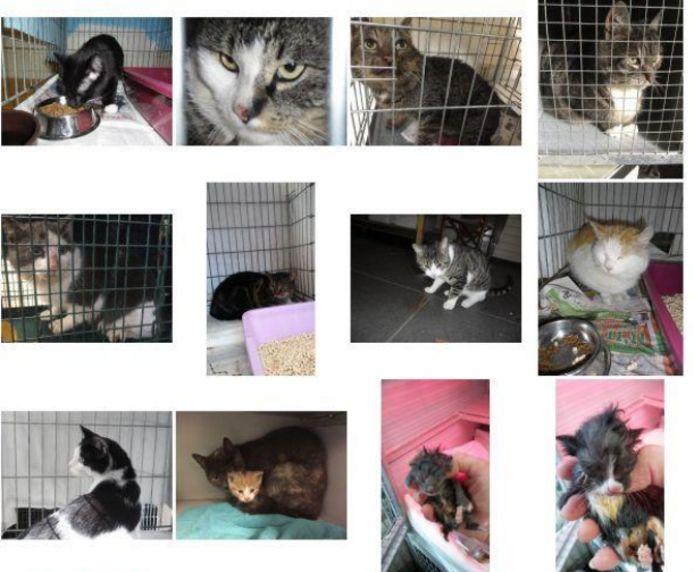 Een aantal van de in 2017 in Tilburg gevangen katten.