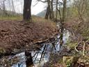 In de Oliemolenbeek in het Renkums Beekdal staat nog een klein laagje water.