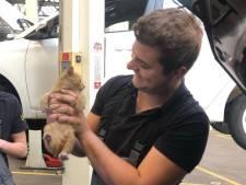 Monteurs ontdekken kitten onder motorkap van auto: 'Voor ons de eerste keer'