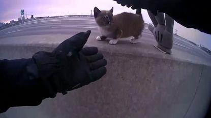 Kijk hoe schattig kitten reageert wanneer agent haar van snelweg redt