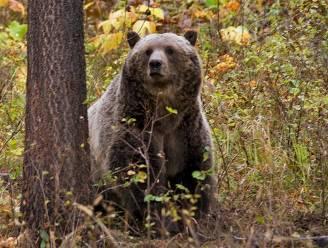 Grizzlybeer die Amerikaanse vrouw (65) doodde tijdens kampeertocht neergeschoten