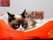 Gek op katten? Dit weekend kun je 72 minuten lang kattenfilmpjes kijken op het witte doek