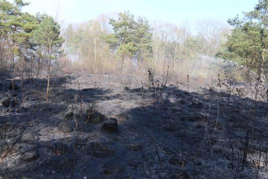 Het afgebrande stuk natuur aan de Schelmseweg.