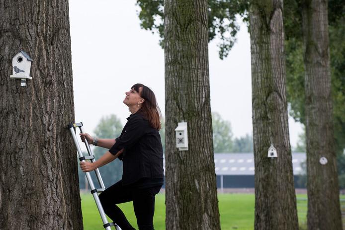 Sylvia de Haan heeft de bomen aan de Bommelweg en Groenestraat opgefleurd met vogelhuisjes.
