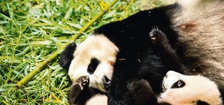 Ouwehands Dierenpark start doneeractie voor voedsel van dieren: 'Sluitingen raken ons hard'