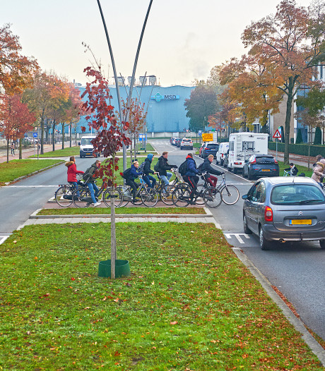 Oss past beruchte kruising met fietsstraat alsnog aan: parkeervak verdwijnt