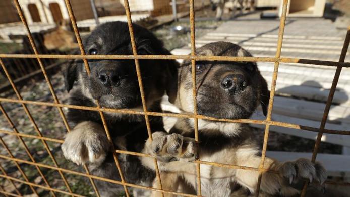 Puppies in het asiel wachten nu op een baasje.