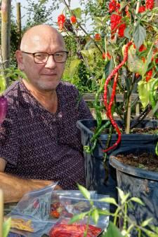 Adri kweekt de heetste peper ter wereld in zijn Waalwijkse volkstuin