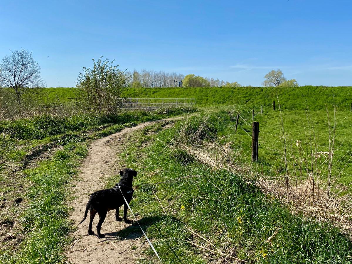 Honden moeten steeds aan de leiband tijdens het wandelen