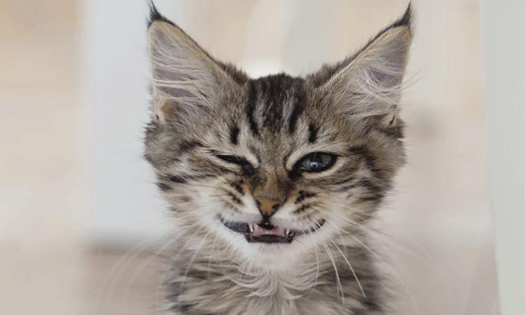 Kat gaat per ongeluk met buren mee op vakantie