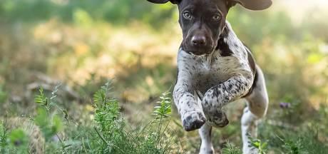 Kamervragen Partij voor de Dieren over 'click and collect' een hondje in Diessen