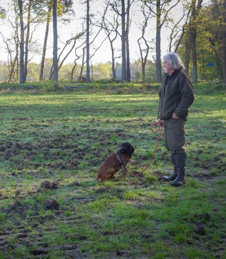 Wilde zwijnen laten niet met zich sollen, lijkt het: moeten we ons in het zwijnenrijke Brabant zorgen maken?
