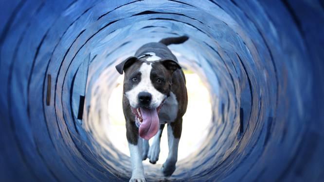 Rattenziekte vastgesteld bij hond