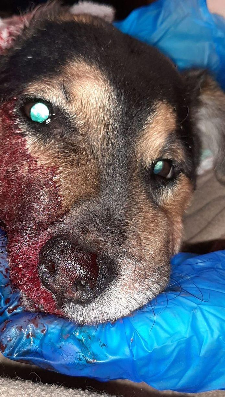 De hond die overleed door het vuurwerk.