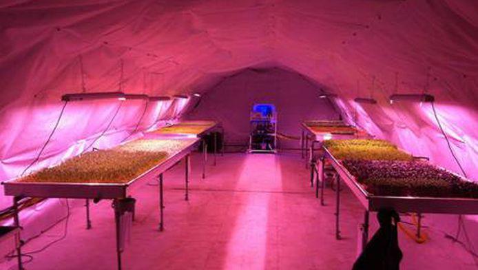 Hydrocultuur, LED-lichten en een natuurlijke constante temperatuur van 16 graden maken de ondergrondse moestuin mogelijk.