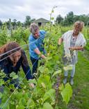 De familie Van Keulen aan het werk op de wijngaard.