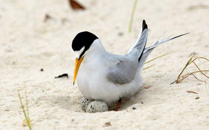 Ook zeldzame broedvogels in het gebied zijn bedreigd.
