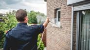 """Brandweer krijgt drie keer zoveel oproepen om wespennesten te verdelgen: """"De hittegolf speelt zeker een rol"""""""
