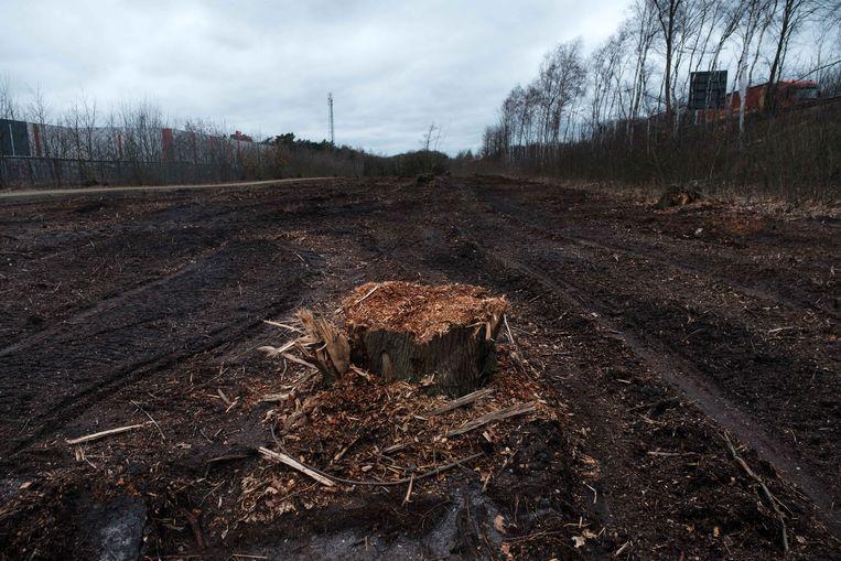 Elf jaar na de eerste uitbreiding van H. Essers in Genk gaat het bedrijf een stuk bos tussen hal zes en de E314- autoweg opnieuw aanleggen.